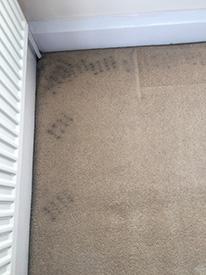 Carpet Cleaner Poulton